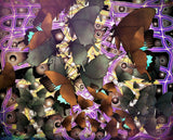 Butterflies Gather To Amethyst Webbing