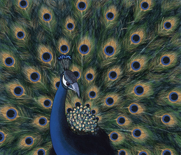 Proud Peacock Displays His Tail