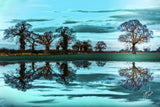 Reflection of Catterton