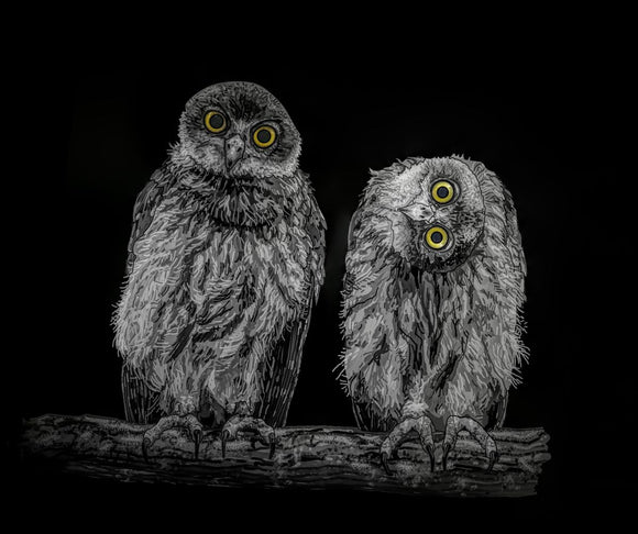 Barking Owls Black And White