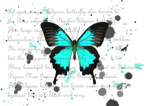 Ulysses Butterfly White Background
