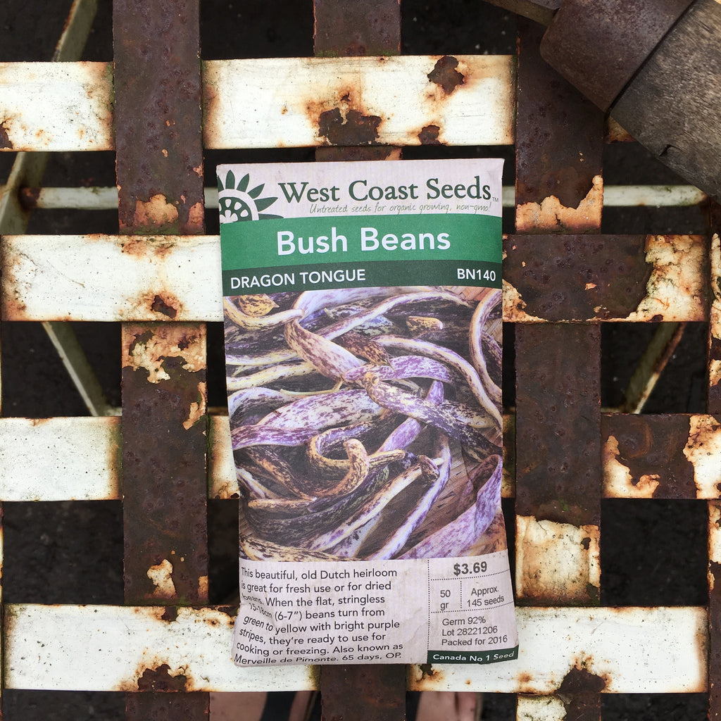 Beans (Bush) - Dragon Tongue