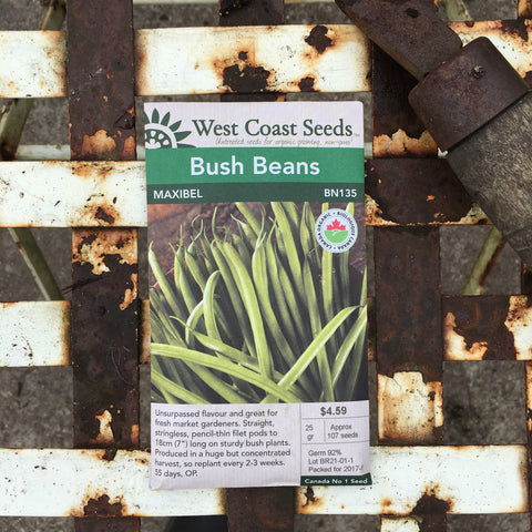 Beans (Bush) - Green Maxibel