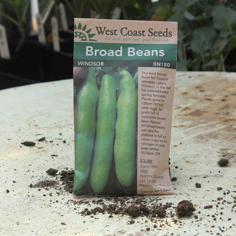 Beans (Broad) - Windsor