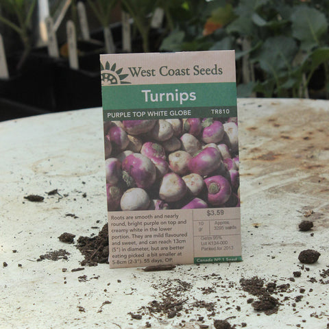 Turnips - Purple Top Globe White