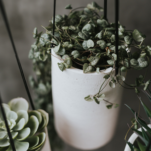 IVY HANGING PLANTERS