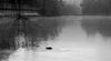 Audley - Ducks & a Foggy Dawn (B+W)