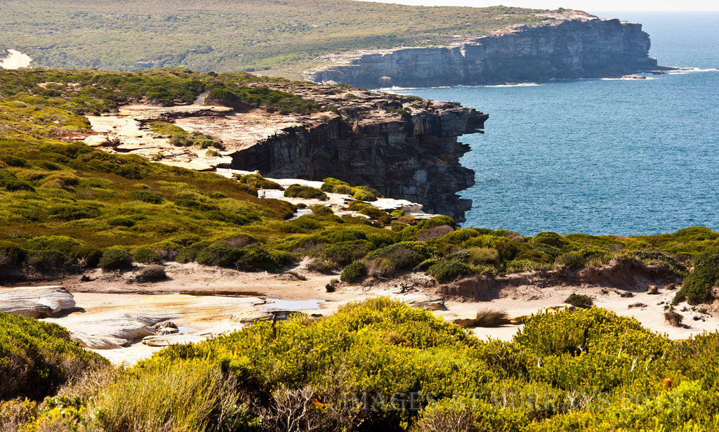 Daytime Scenic in the Royal National Park