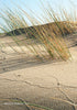 The Elouera Dune - Grasses & Tracks