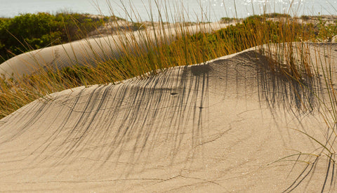 The Elouera Dune - Scenic Grasses & Tracks