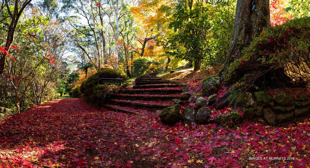 The Colours of Autumn - the Carpet of Dreams