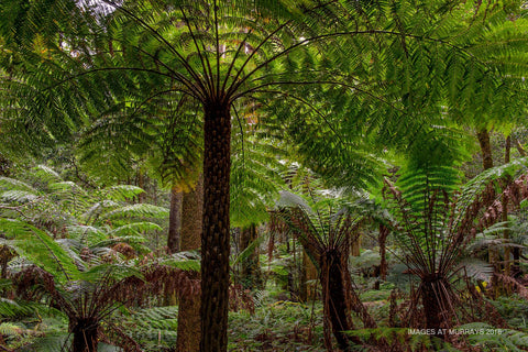 The Cathedral of Ferns - Solitude under the Canopy