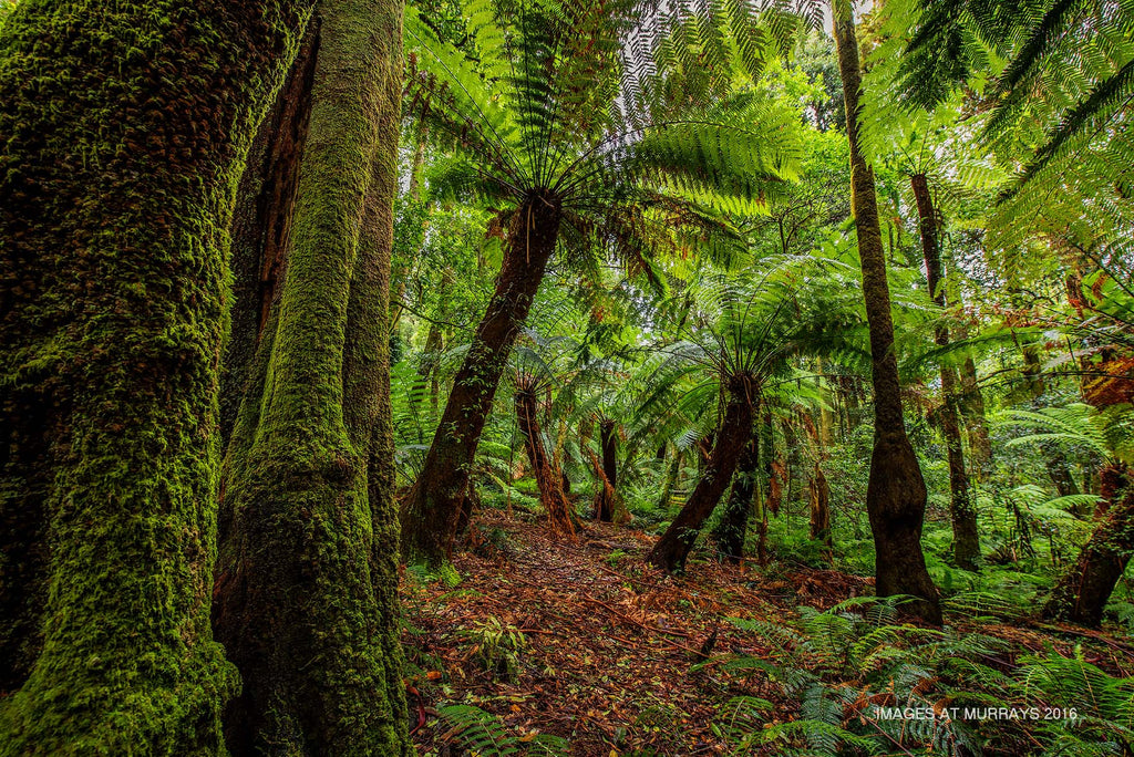 The Cathedral of Ferns - Looking for the Dinosaurs ..