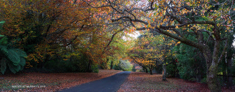 The Colours of Autumn - a Peaceful Trail ..
