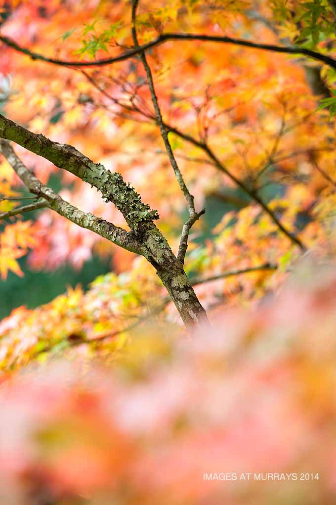 The Colours of Autumn - a Profusion of Pastels at Mt Wilson