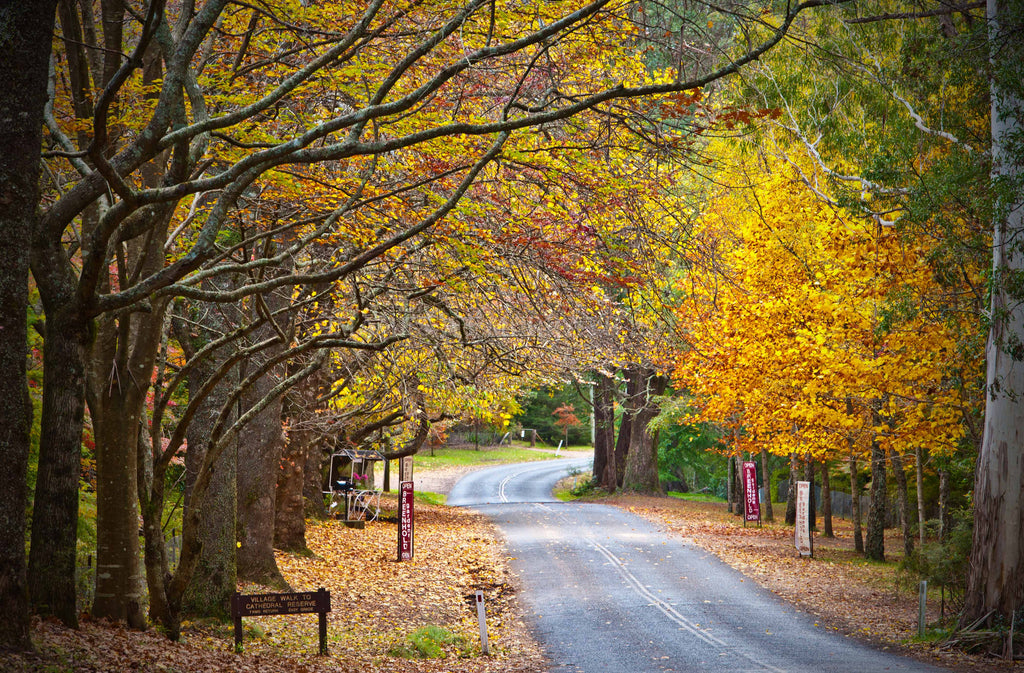 The Colours of Autumn - Queens Avenue at Mt Wilson