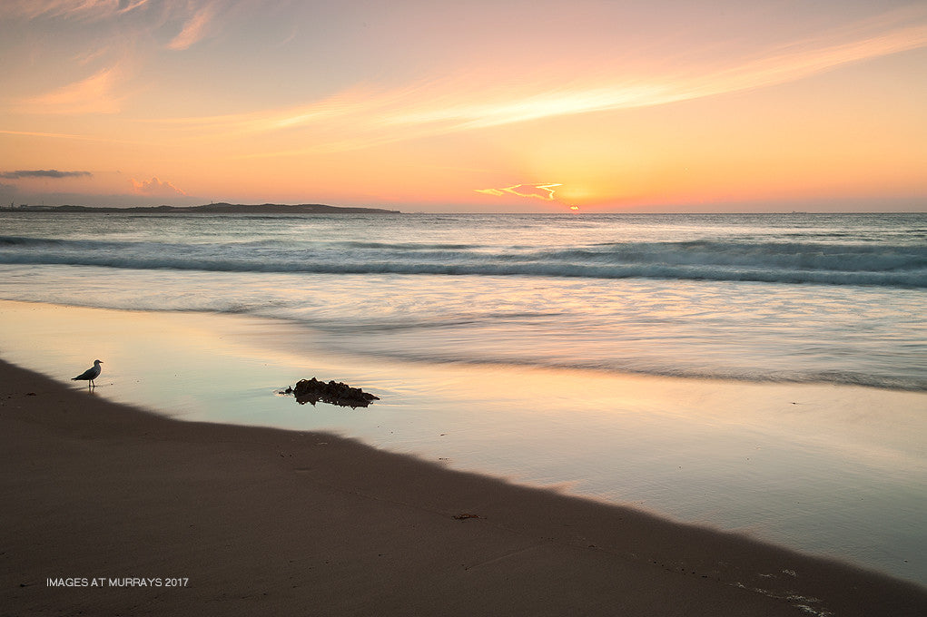 North Cronulla Dawn Filters - an inquisitive Seagull & a beautiful Sunrise