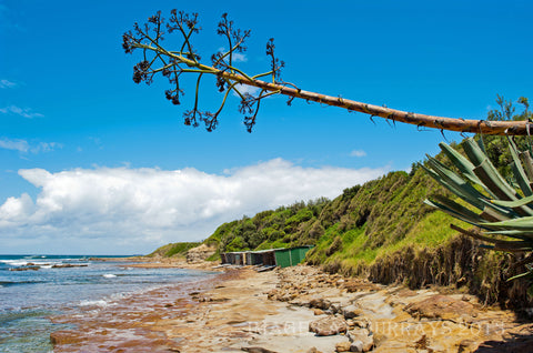 Sandon Point, The Boat-Sheds & that Crazy Tree !