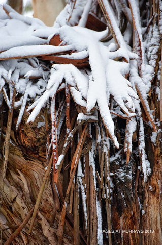 Snow & Bark art - Shooters Hill - 17th June 2018