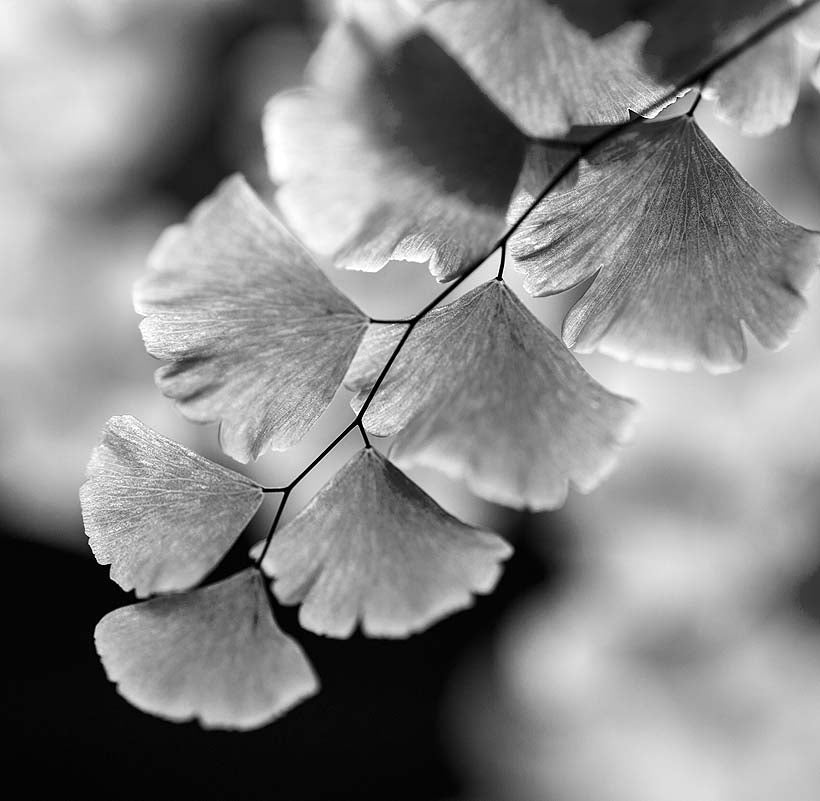 Delicately brushed - B+W
