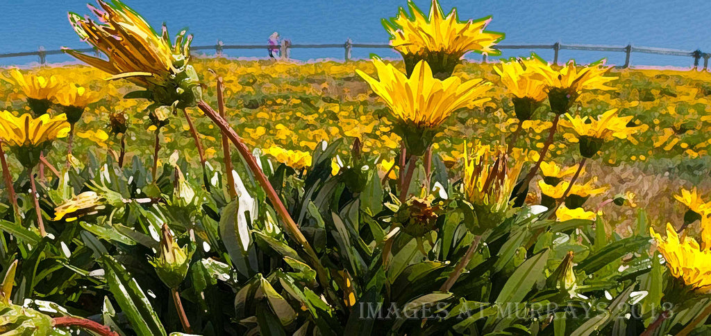 Textured image of Flowers at the Wall at Elouera Beach