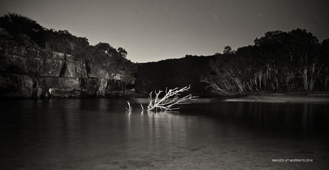 Wattamolla Lagoon - the new Tree by Torch-Light - Mono