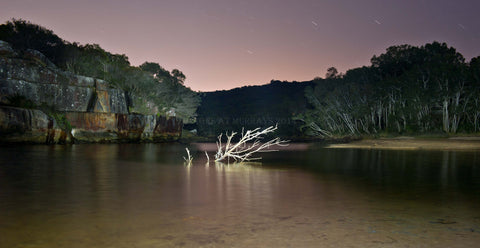 Wattamolla Lagoon - the new Tree by Torch-Light