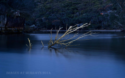Wattamolla Lagoon - the new Tree at Dusk (Torch-Light Detail)