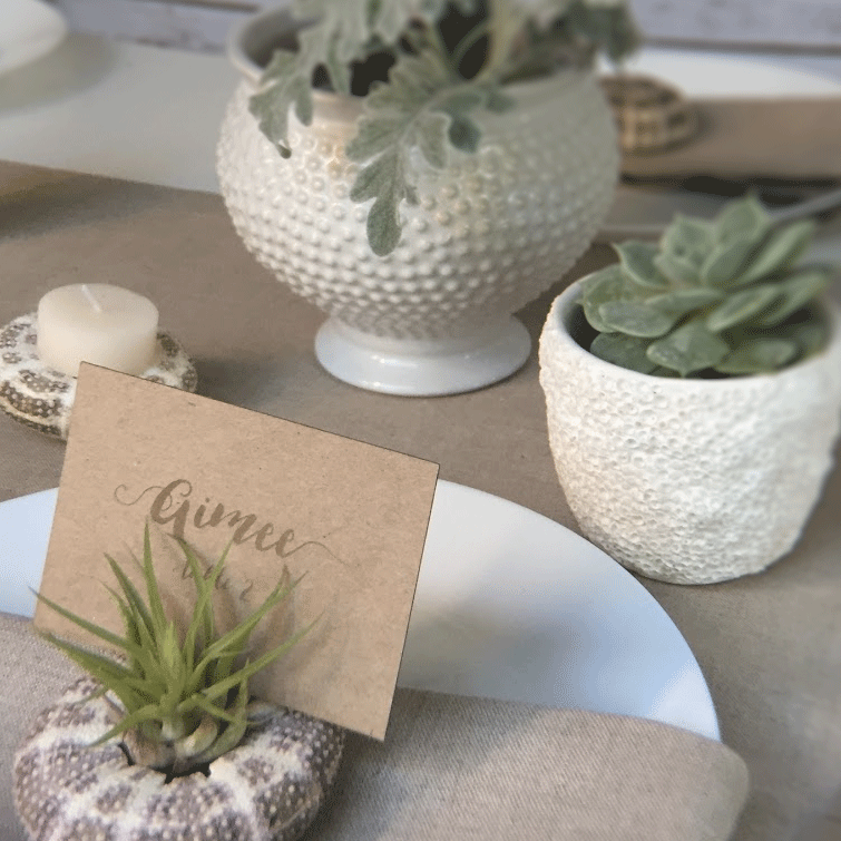 Alfonso Sea Urchin Shell and Tillandsia Airplant Placecard holder
