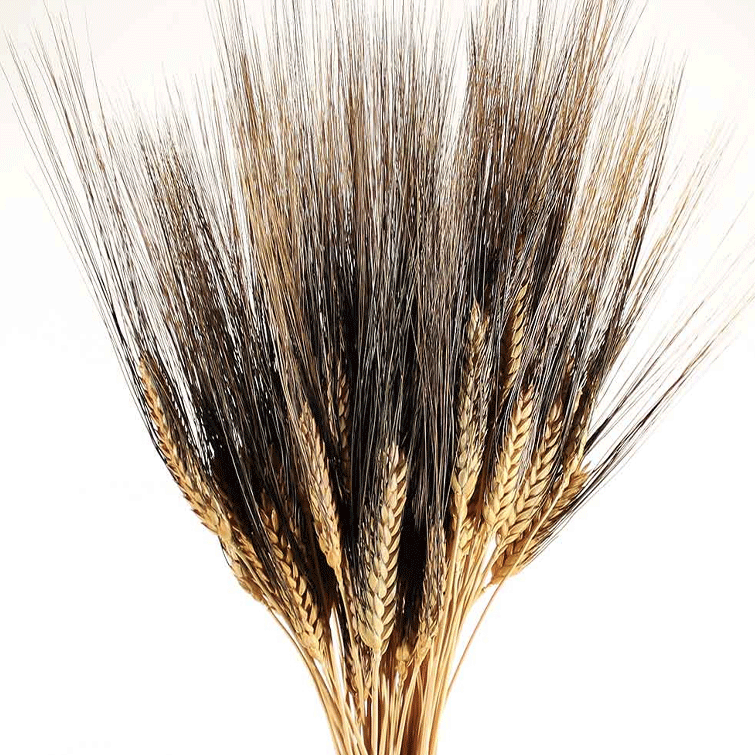 Black Bearded Wheat - 8 oz