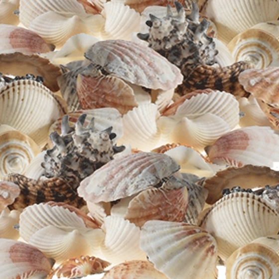 Mixed Sea Shells - 3 Pounds