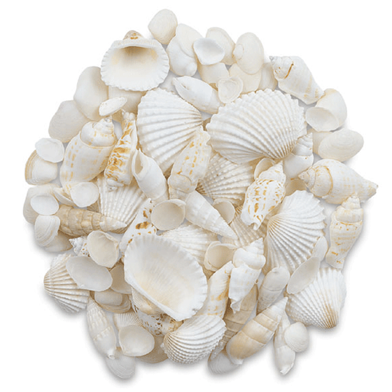 Seashell Assortment - White - 3 Pounds