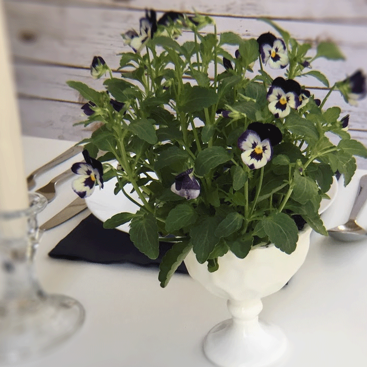 DIY Centerpieces Heirloom Compote - Milky White with white and blue viola pansies