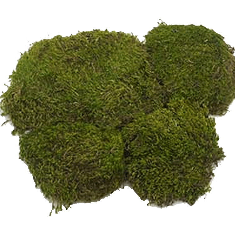 Dyed Mood Moss - 3 Pounds