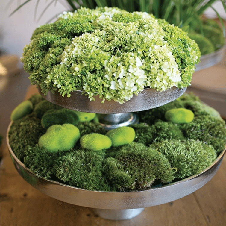 Moss Stones - Pack of 12