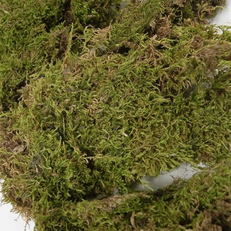 Natural Sheet Moss - 5.5 Pounds