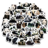 pack de stickers panda sauvage