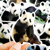 stickers panda bambou