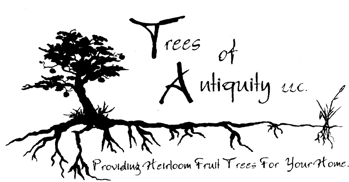 Heirloom Fruit Trees for Home & Farm-Trees of Antiquity