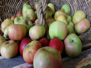 certified organic apple trees for sale