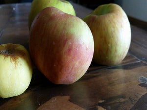 Hanners Best organic heirloom apple tree