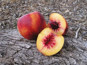 Liz's Late heirloom Nectarine tree