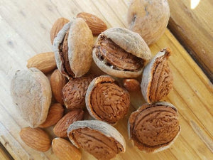 Ne Plus Almond tree for sale