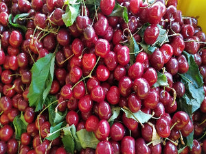 Skeena Cherry tree for sale