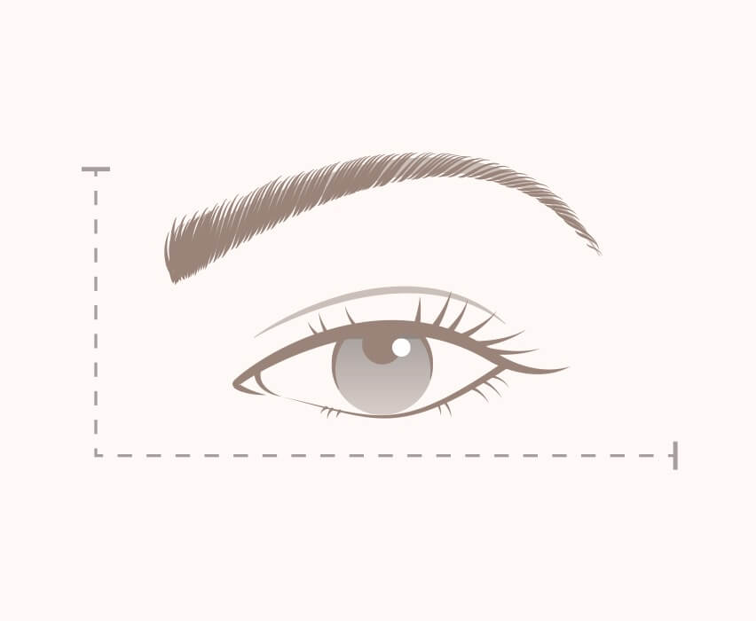 Take our interactive lash guide