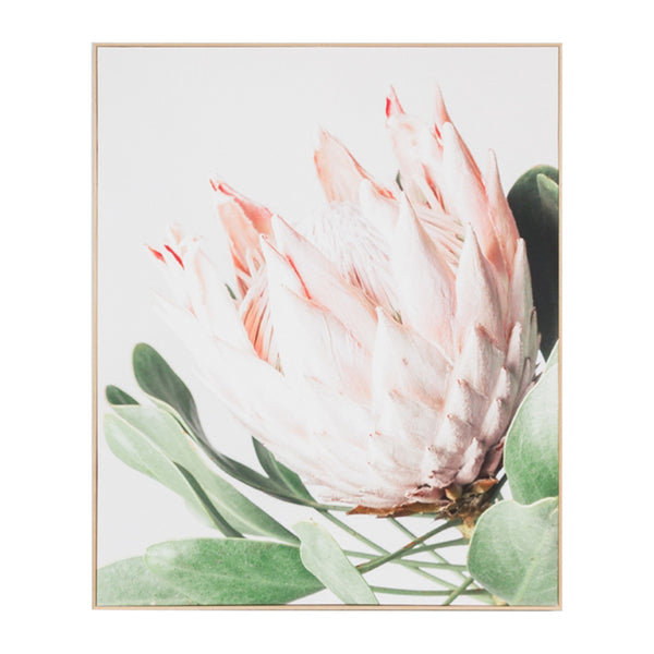 Protea Flower Canvas Print