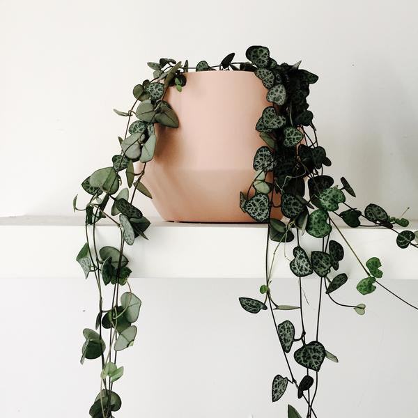 Samso Planter: Blush