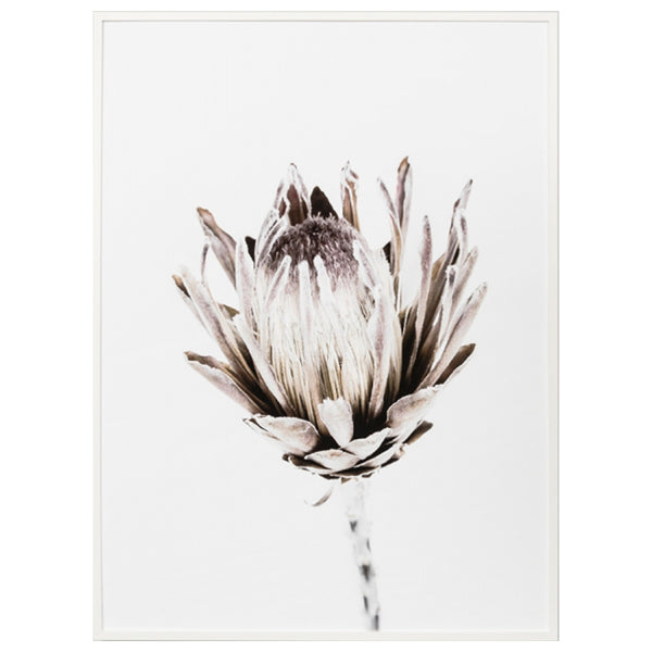 Protea Keepsake Framed Print