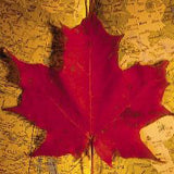 Fall-Maple-Leaf-Map-(Blog-Post)