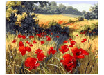 Red Poppy Fields - Artful Addict Paint By Numbers Kits